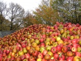 Tauschaktion 2017: 7 kg Äpfel gegen eine Flasche Saft